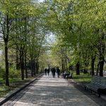 Tree-lined path in Khreshchatyk Park, Kiev, Ukraine.