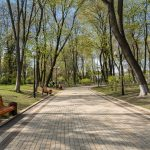 Tree-line path inMariinsky Park, Kiev, Ukraine.