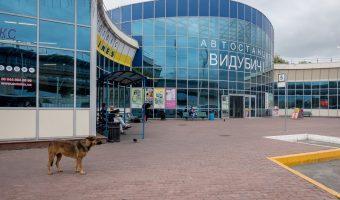 Stray dog at Vydubychi Bus Station in Kiev, Ukraine.