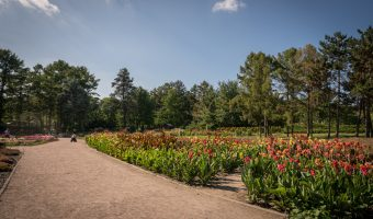 Flower bed at the National Botanical Garden in Kiev, Ukraine