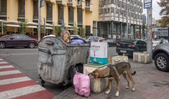 Stray dogs eating from a bin in Kiev city centre