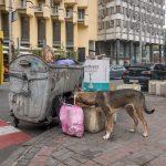 Stray dogs eating from trash in Kiev city centre. Taken at the junction of Rohnidynska Street and Shota Rustaveli Street.