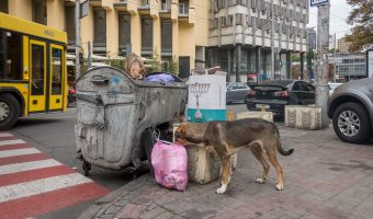Stray dogs eating from trash in Kiev city centre. Taken at the junction of Rohnidynska Street and Shota Rustaveli Street.