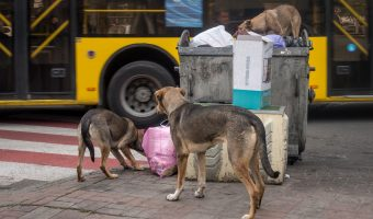 Stray dogs in Kiev city centre. Taken on Shota Rustaveli Street, near Palats Sportu Metro Station.